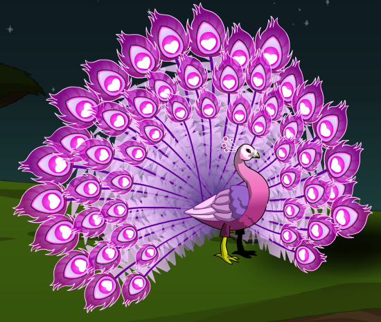 Pink peacock bird - photo#24