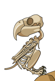 UndeadParrot.png